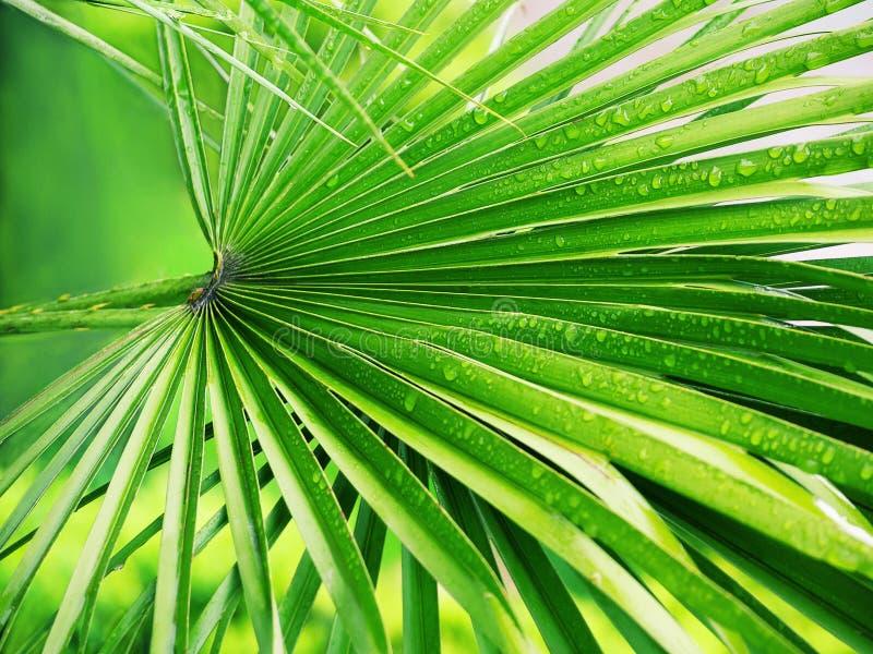 Heldergroen palmblad met waterdalingen royalty-vrije stock foto's