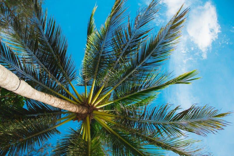 Heldergroene blad tropische varen op een lichtgroene vage achtergrond close-up met bokeh Mooi Bush in de tropische tuin stock afbeelding
