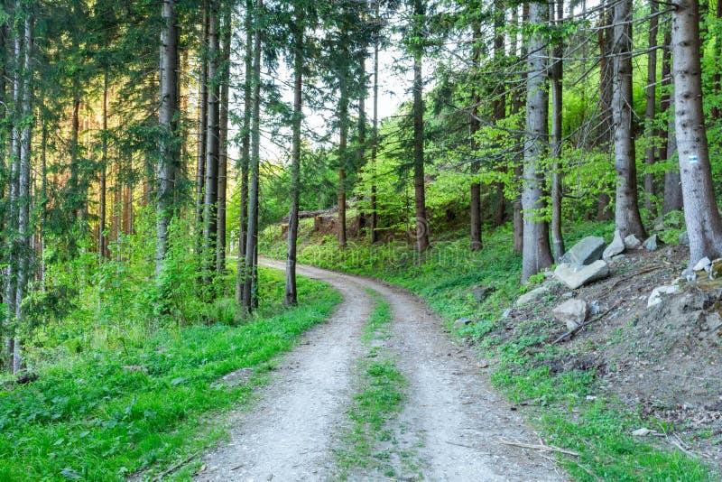 Heldergroene bos natuurlijke gang in zonnig daglicht Zonneschijn bosbomen Zon door levendig groen bos stock foto