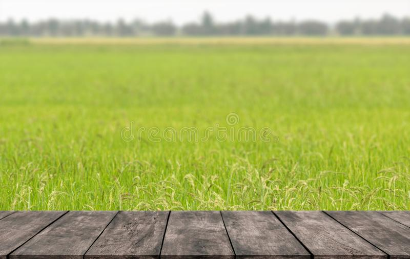 Heldergroene padievelden in de hete zomer in tropisch met houten planken waar u de showproducten kunt plaatsen royalty-vrije stock afbeeldingen