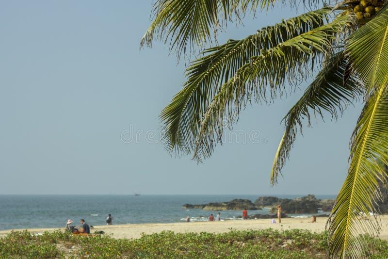 Heldergroene palmbladen met kokosnotenclose-up op een vage achtergrond van groen gras op een wit zandig strand met rustende mense stock fotografie