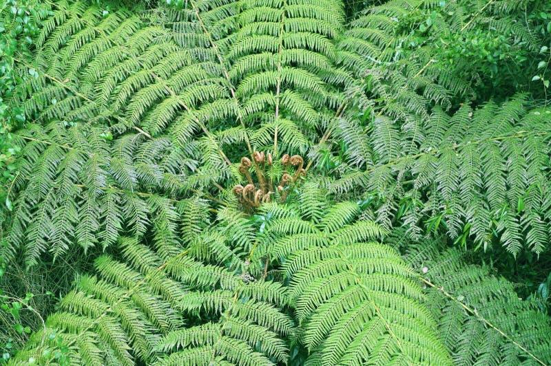 Helecho de árbol en selva tropical fotografía de archivo
