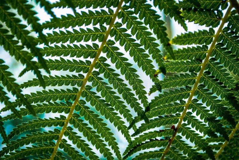 Helecho en el jardín botánico imagenes de archivo