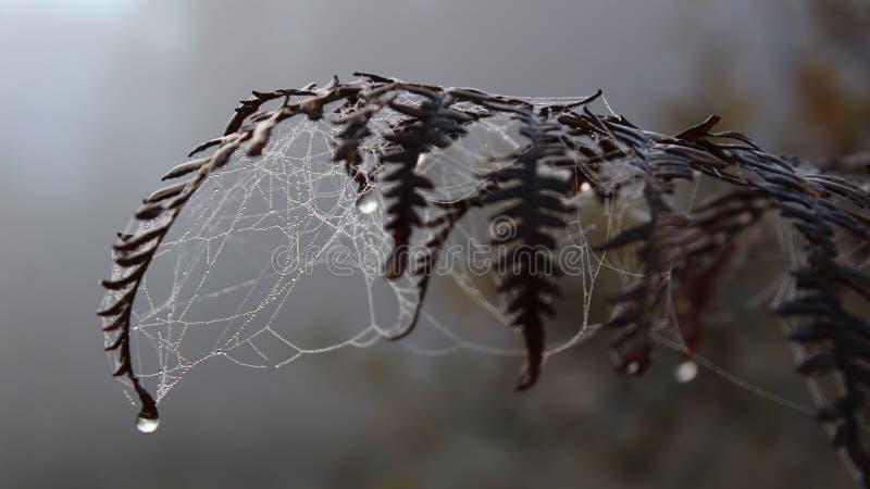 Helecho-n-web en la mañana de niebla imágenes de archivo libres de regalías