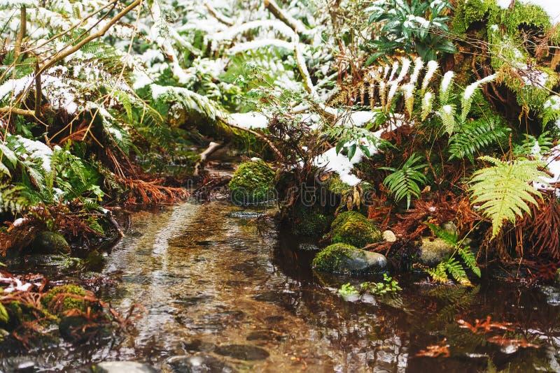 Helecho que crece a lo largo de The Creek en invierno imagenes de archivo