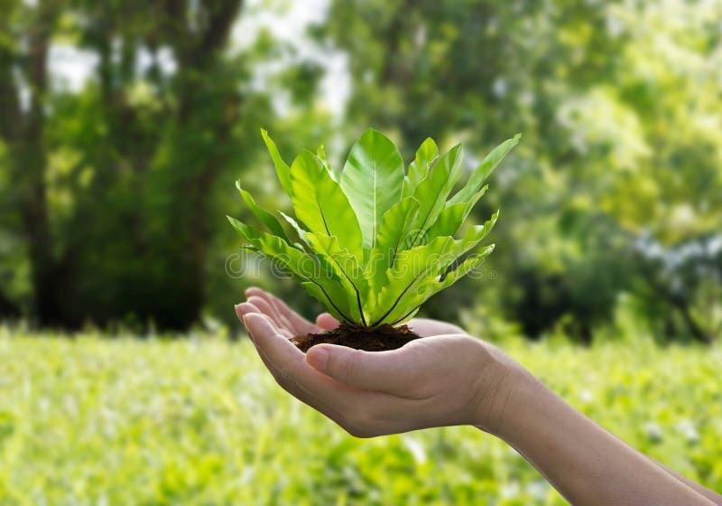 Helecho verde en manos en fondo tropical del verano de la naturaleza imágenes de archivo libres de regalías