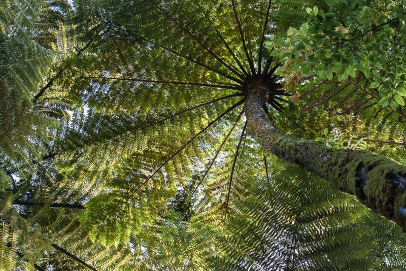 Helechos de árbol en China imagen de archivo