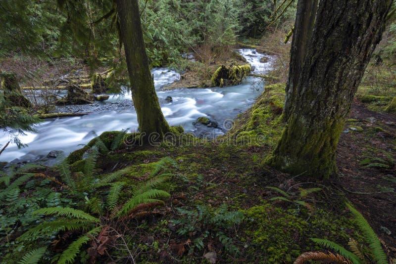 Helechos de Creekside foto de archivo libre de regalías