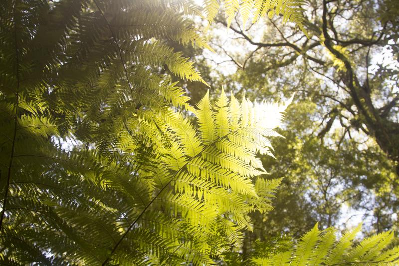 Helechos hermosos en el bosque y la sol Australia agradable fotografía de archivo