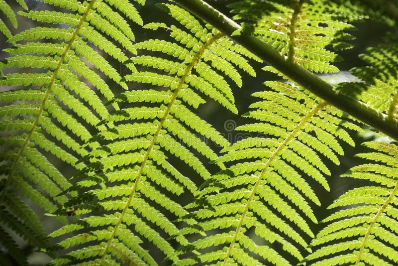 Helechos hermosos en el bosque y la sol Australia agradable imágenes de archivo libres de regalías