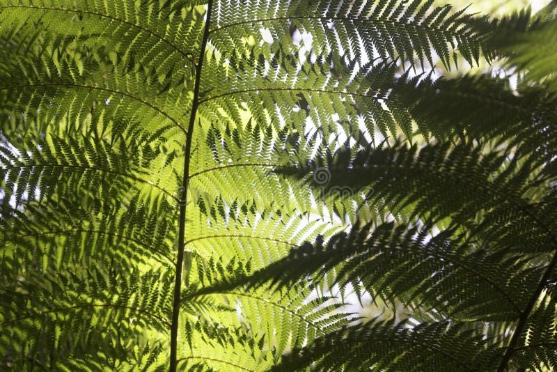 Helechos hermosos en el bosque y la sol Australia agradable foto de archivo