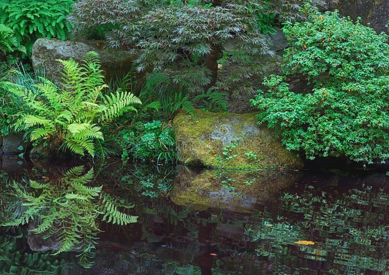 Helechos, jardín japonés foto de archivo