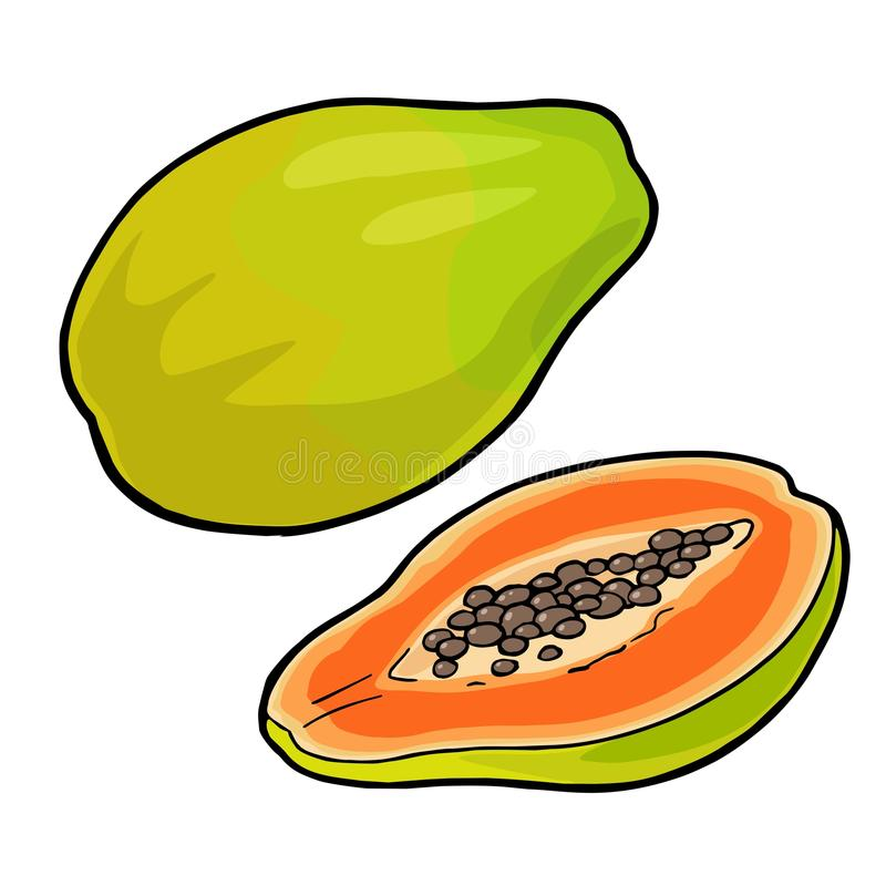 Helhet och halv papaya Färg för vektortappninggravyr royaltyfri illustrationer
