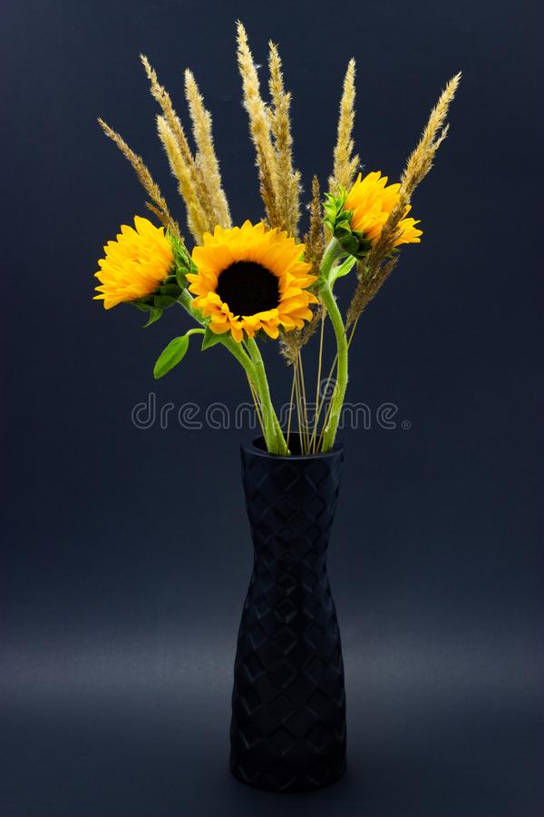 Helianthus, bright yellow sunflowers with cereals in a black vase on a dark background floral background royalty free stock photography