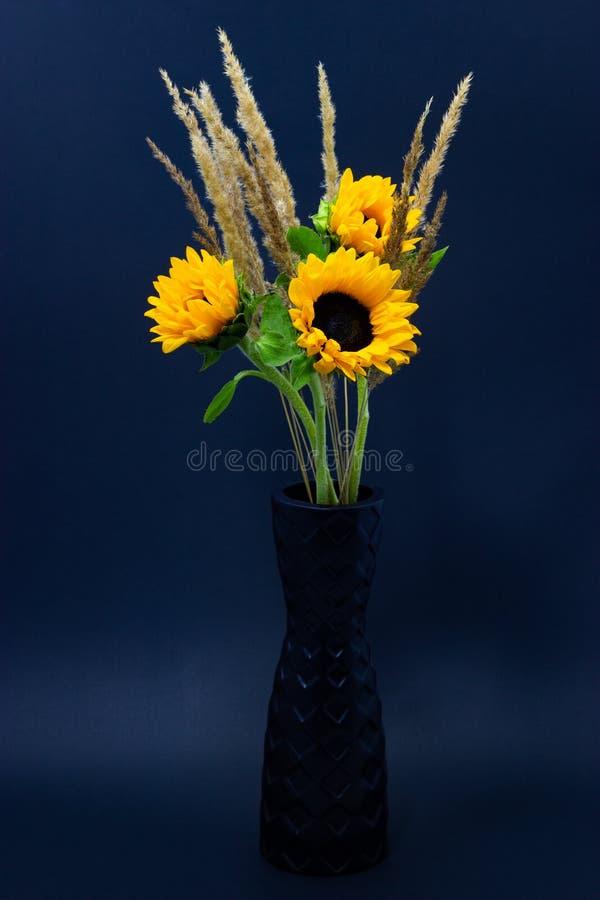 Helianthus, heldere gele zonnebloemen met graangewassen in een zwarte vaas op een donkere bloemenachtergrond als achtergrond stock afbeeldingen