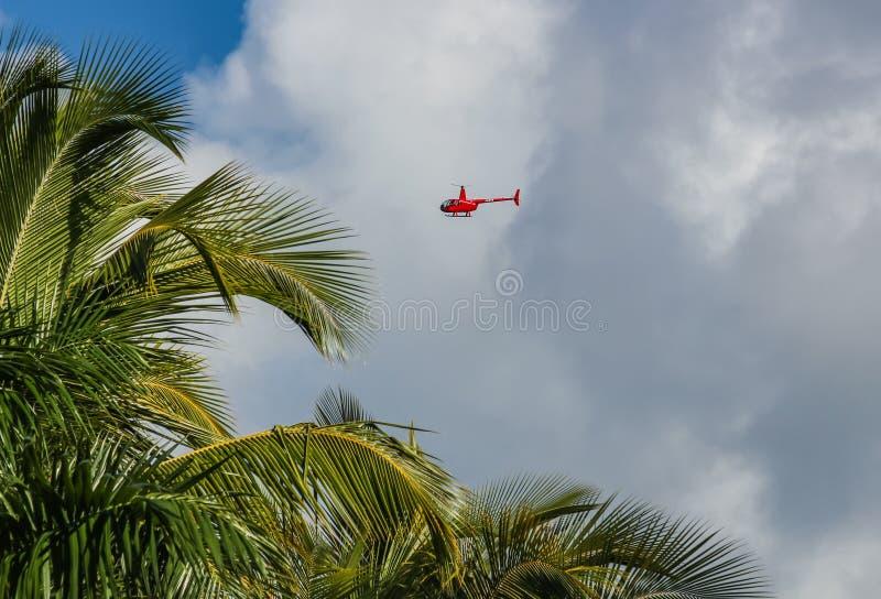 Helicóptero e palmeiras na praia de Catalonia Bavaro na República Dominicana imagens de stock