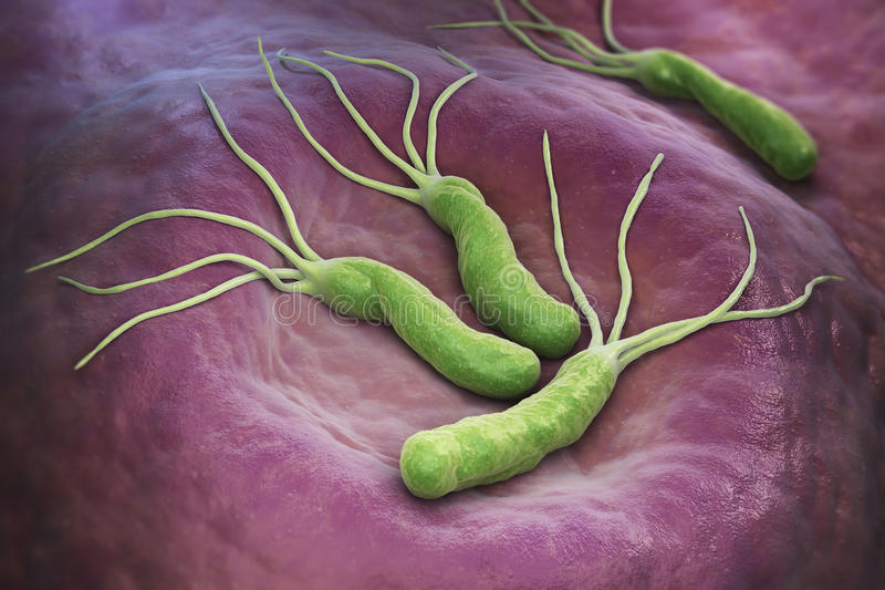 Helicobacter幽门细菌 皇族释放例证