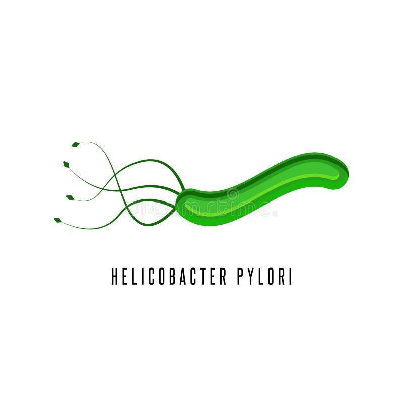 Helicobacter odźwierników ilustracyjna microaerophilic bakteria która infekuje różnorodnych tereny dwunastnica i żołądek ilustracja wektor