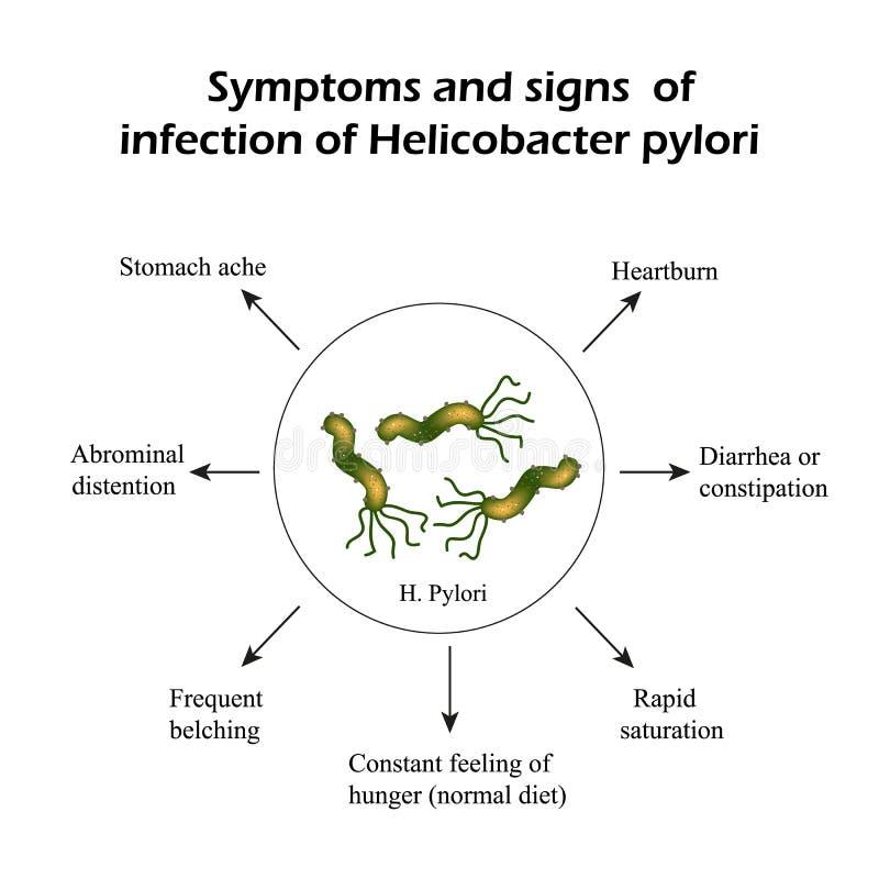 Helicobacter odźwierniki Objawy infekcja Infographics również zwrócić corel ilustracji wektora royalty ilustracja