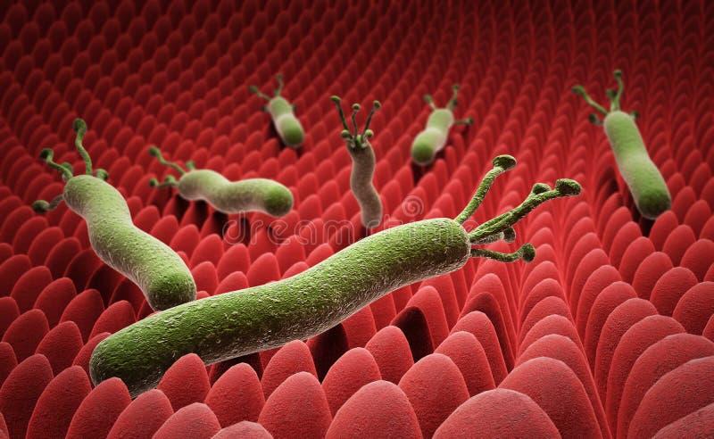 Helicobacter pylori på yttersidan av magen 3d framför på w stock illustrationer