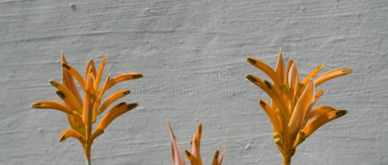 Download Heliconia flowers stock image. Image of flora, botanic - 11604897