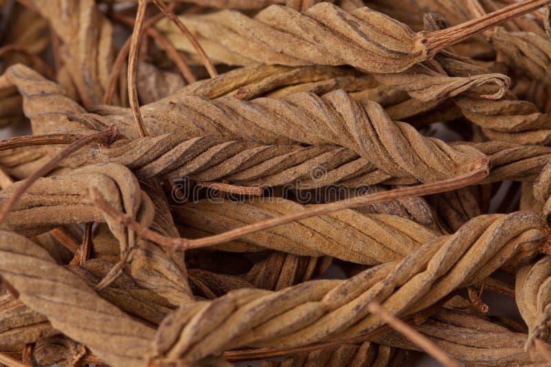 Helicteres Isora (Marod Phali (Hindi) stockfotos
