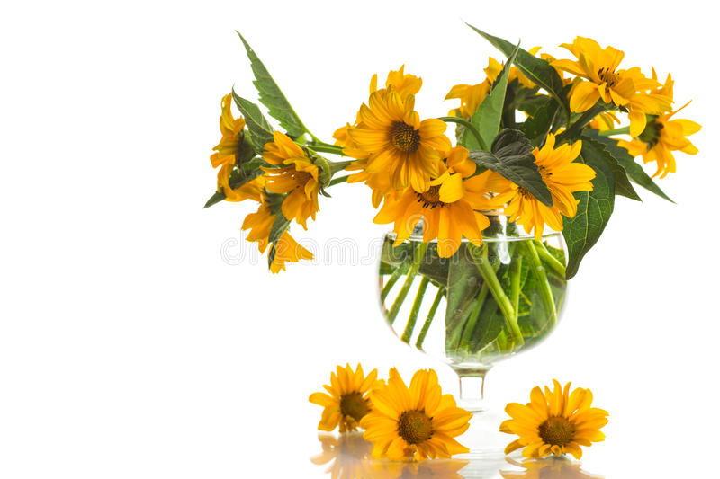 Heliopsis stock images
