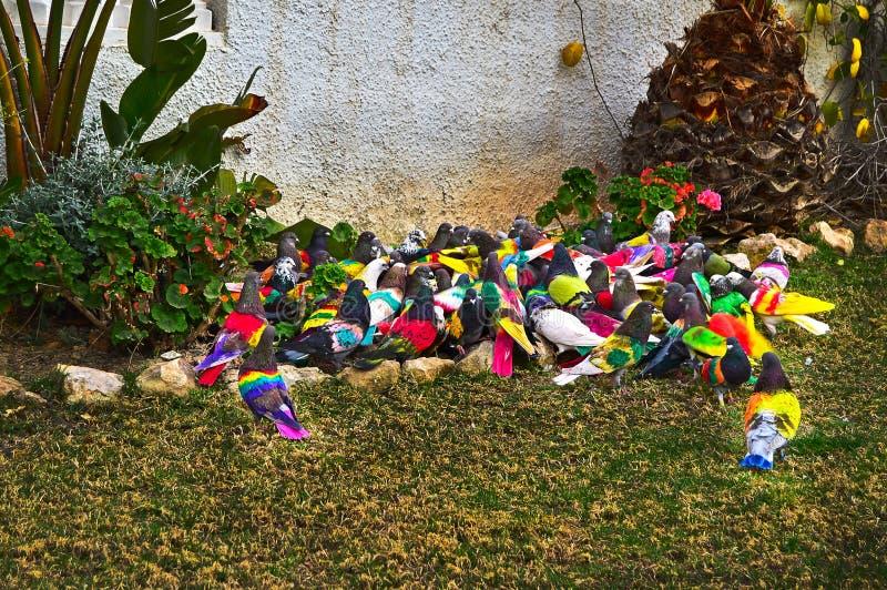 Hell farbige Vögel stockfotos