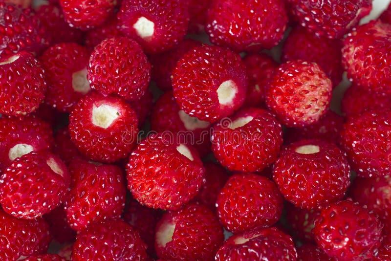 Hell reife wilde Erdbeeren - viele Beeren schließen Makro lizenzfreie stockfotografie