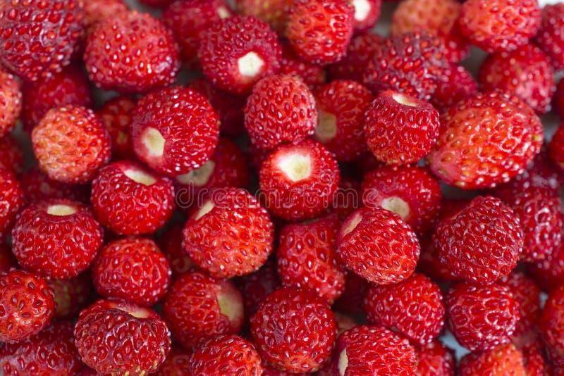 Hell reife wilde Erdbeeren - viele kleine Beeren schließen Makro lizenzfreie stockbilder