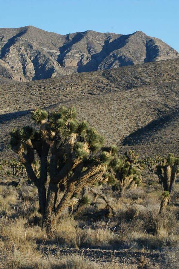 Hellblauer Himmel überlagert Wüsten-Skyline stockfotografie
