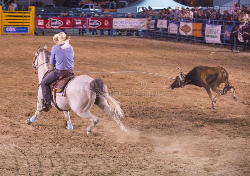 Helldorado Days Rodeo Editorial Image