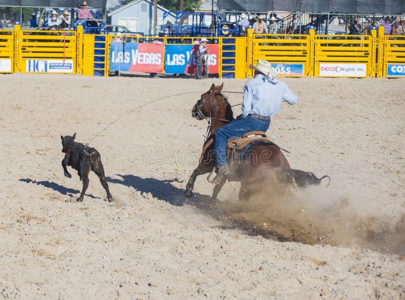 Download Helldorado days rodeo editorial stock image. Image of dakota - 33135194