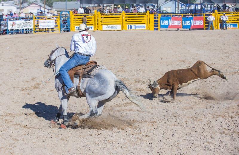 Download Helldorado days rodeo editorial stock photo. Image of arena - 33135198
