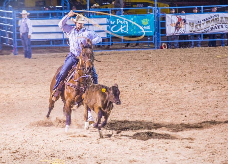 Helldorado days Rodeo. LAS VEGAS - MAY 16 : Cowboy Participating in a Calf roping Competition at the Helldorado days Rodeo , A Professional Rodeo held in Las royalty free stock photo