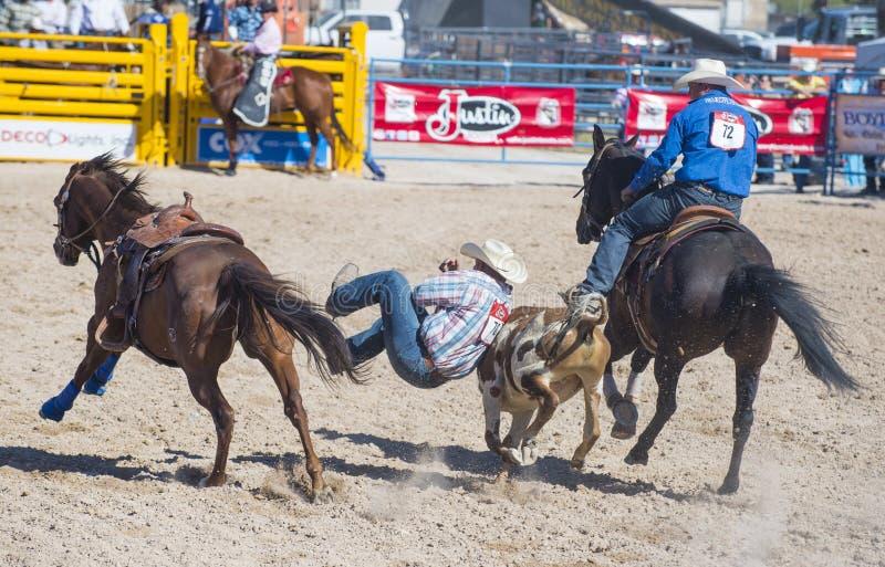 Download Helldorado days rodeo editorial photography. Image of helldorado - 32890747