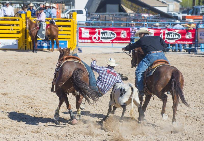 Download Helldorado days rodeo editorial stock photo. Image of ride - 33135188