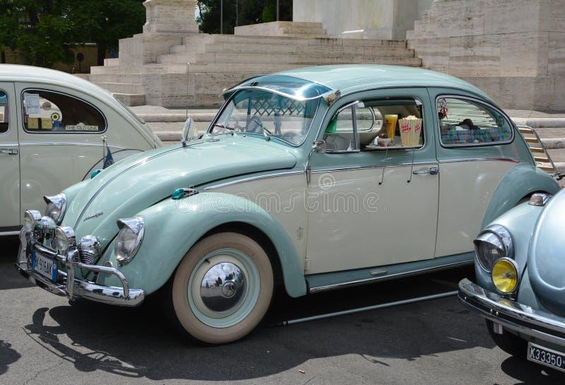 Helle Azure Beetle stockfotos