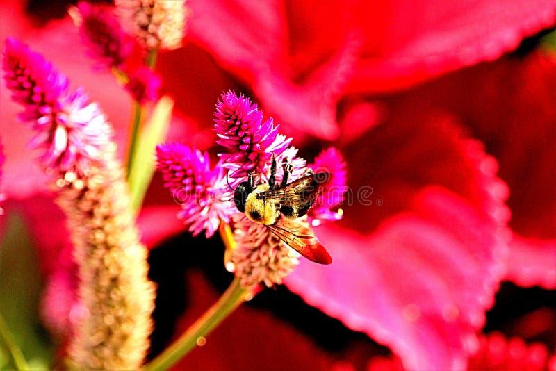 Helle Biene und Blume lizenzfreie stockfotos