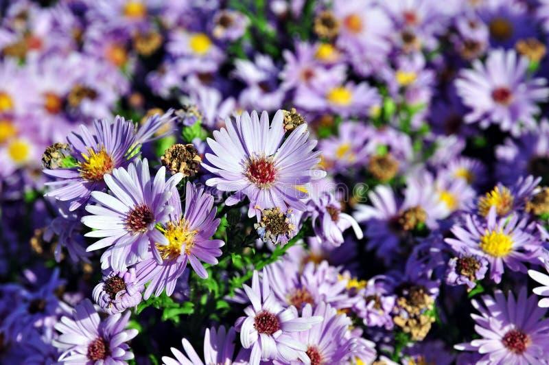 Helle blaue Blumen stockfoto