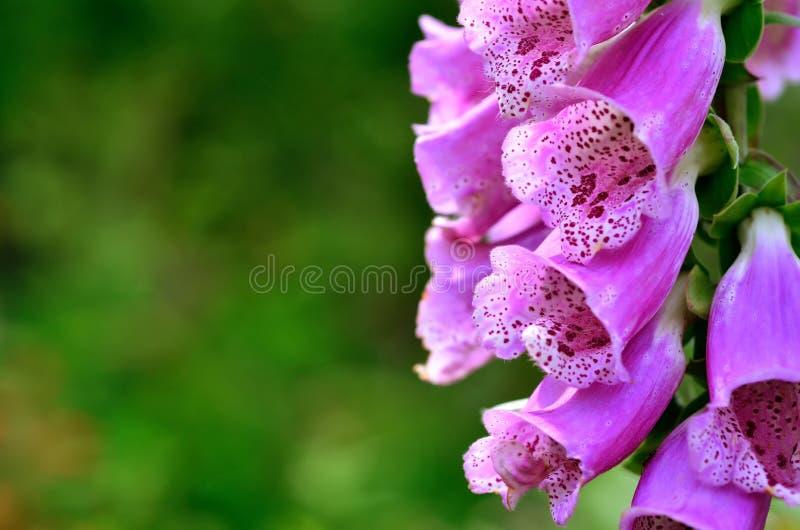 Helle Blumen des Sommers Sonniger Tag lizenzfreie stockfotos