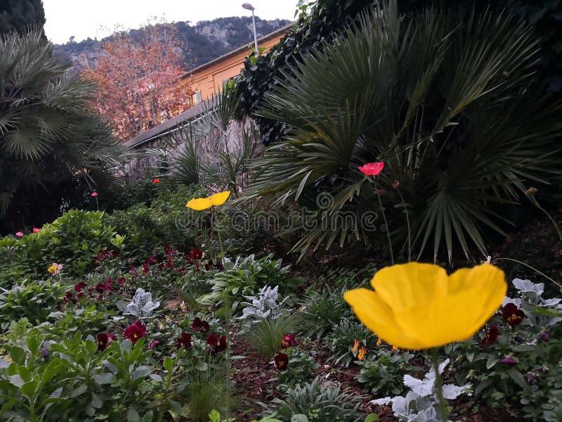 Helle Blumen und Palme in Villefranche-sur-Mer Frankreich lizenzfreie stockbilder