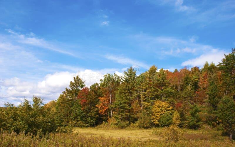 Helle Fall-Farben stockfoto