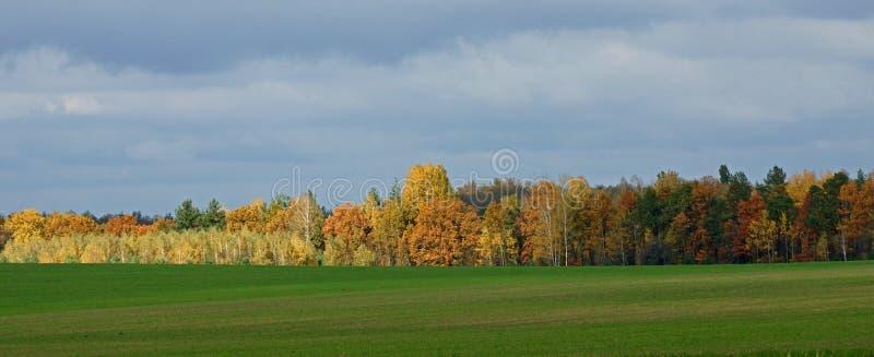 Helle Farben des Herbstes stockbilder