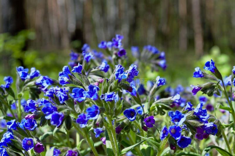 Helle Farben des Waldes der Blumen im Frühjahr lizenzfreies stockfoto