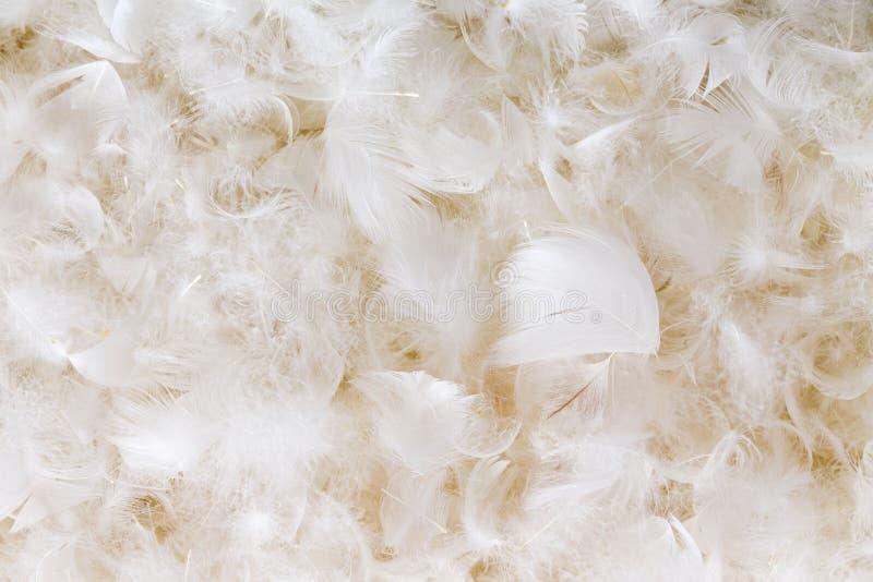 Helle flaumige Hintergrundbeschaffenheit der weißen Feder lizenzfreies stockfoto