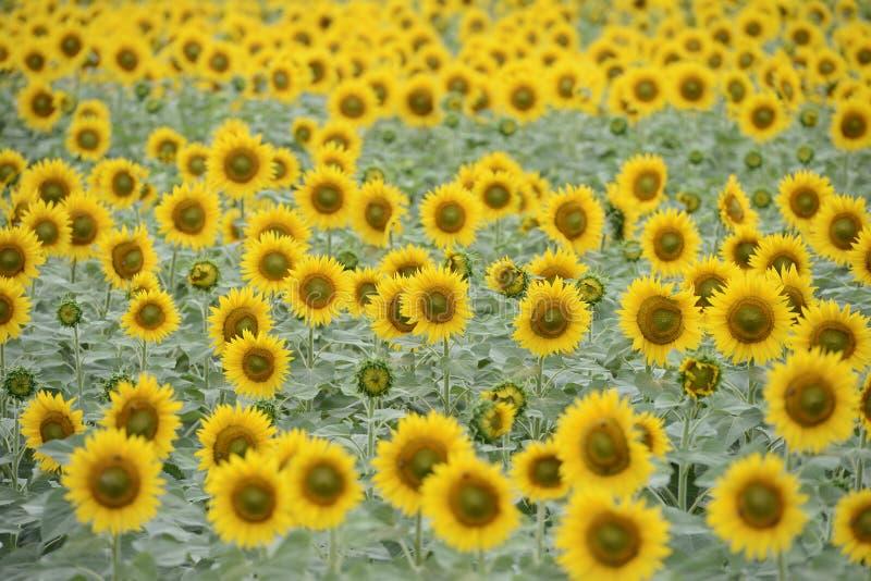 helle gelbe Blume mit Biene in der Mitte stockbilder