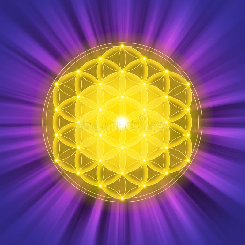 Helle goldene Blume des Lebens auf purpurroten hellen Strahlen vektor abbildung
