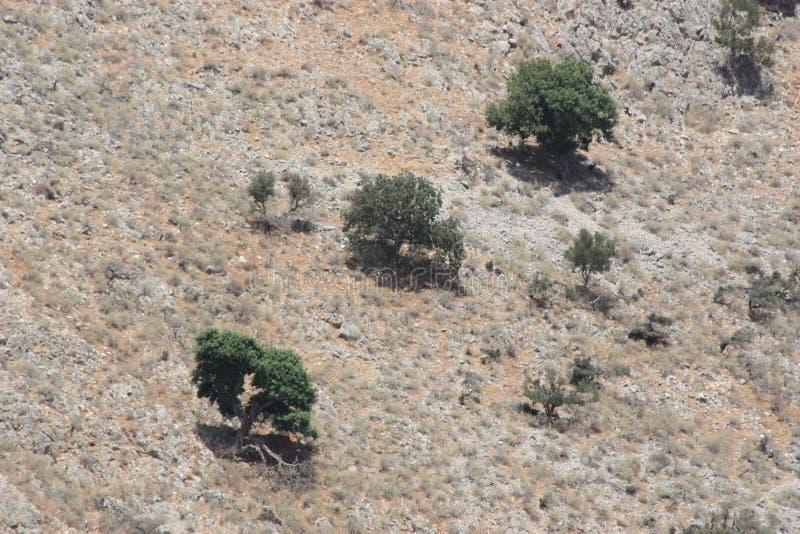 Helle Hügelwand mit kleinen Bäumen auf ihr lizenzfreies stockfoto