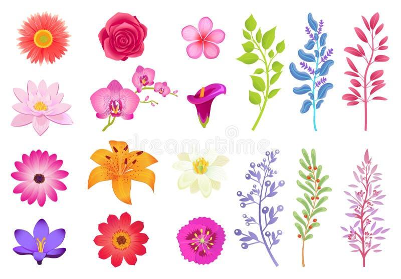 Helle herrliche Blumen und wilde nützliche Kräuter lizenzfreie abbildung